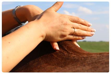 Raindrop Technique® Pferde Anwendung