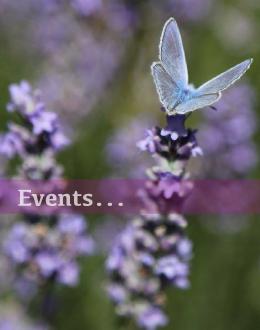 Navigation zu Veranstaltungen und Events